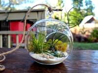 10 Beautiful Plant Terrariums | Home Designing