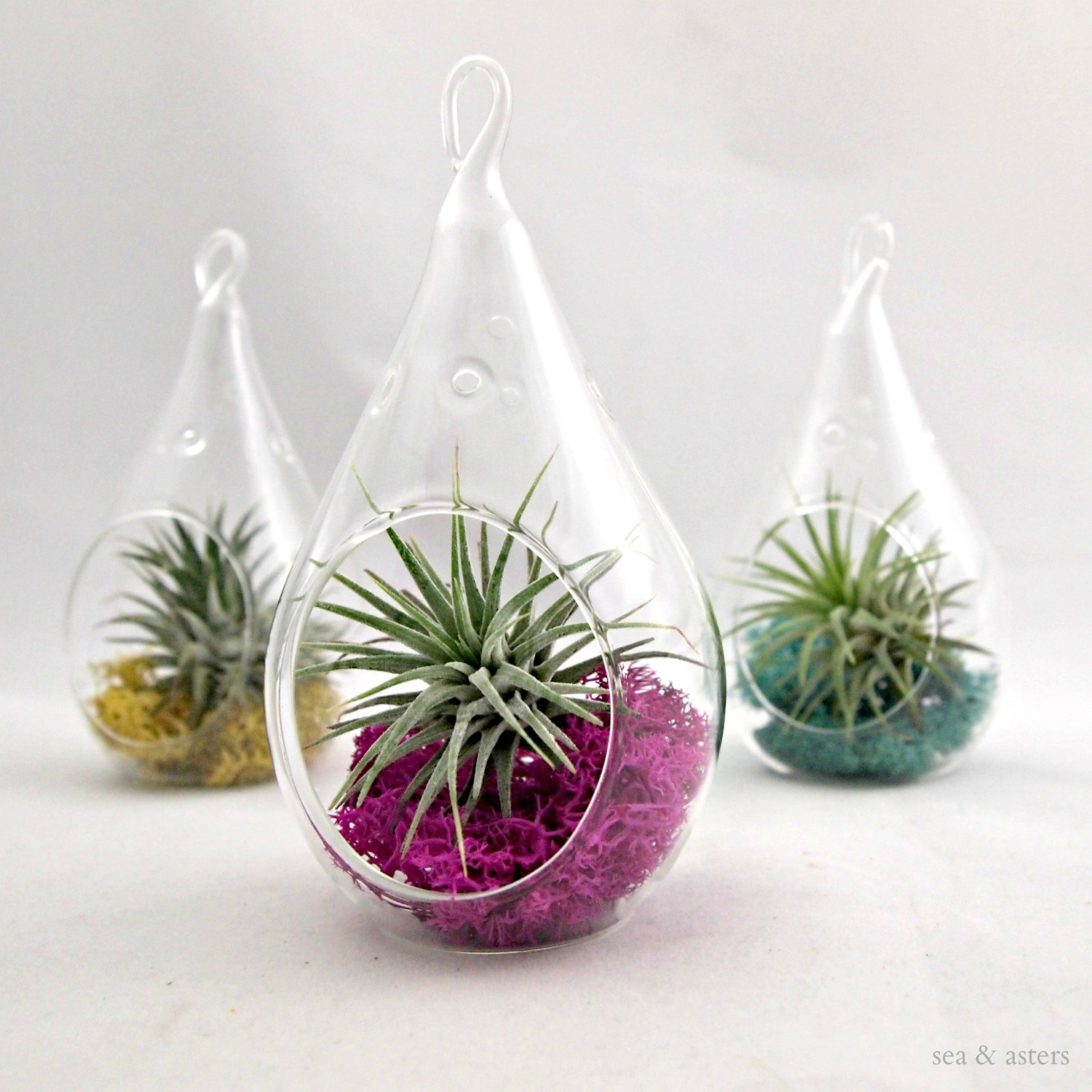Indoor Hanging Plant Containers