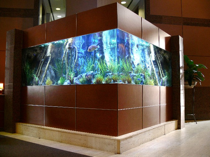 Aquarium Patterns for Home  Office  Home Designing