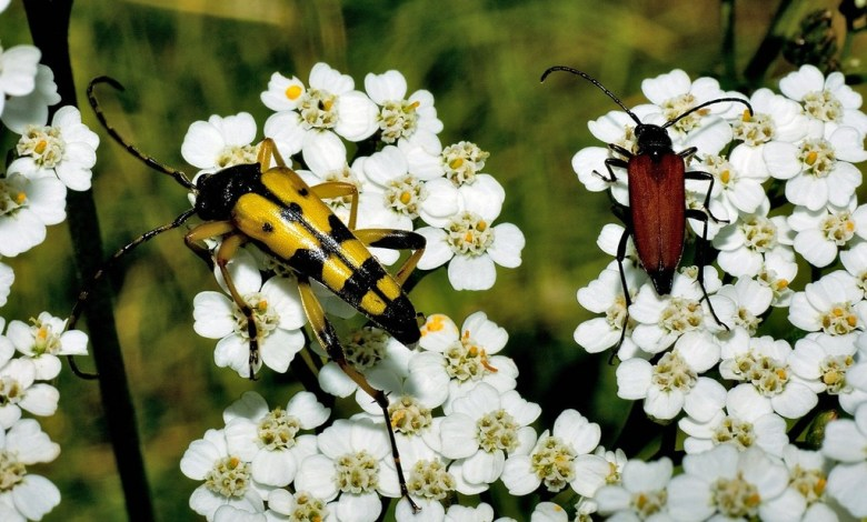 Garden Bugs
