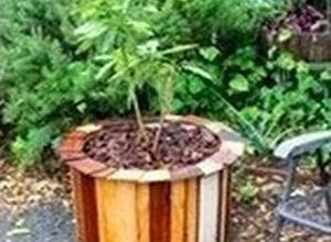 Small Barrel Planter