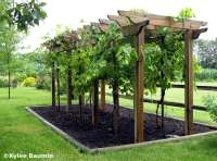 Backyard arbor ideas Photo