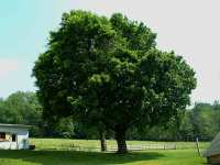 Backyard trees - large and beautiful photos. Photo to ...