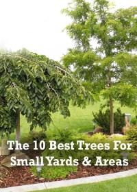 Good backyard trees - large and beautiful photos. Photo to ...