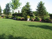 Backyard privacy landscaping ideas - large and beautiful ...