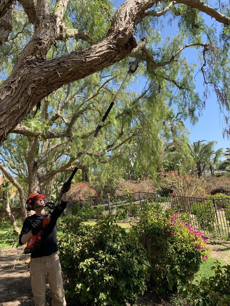 milwaukee pole saw