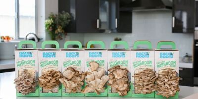 Back to The Roots – A Mushroom Growing Kit Review