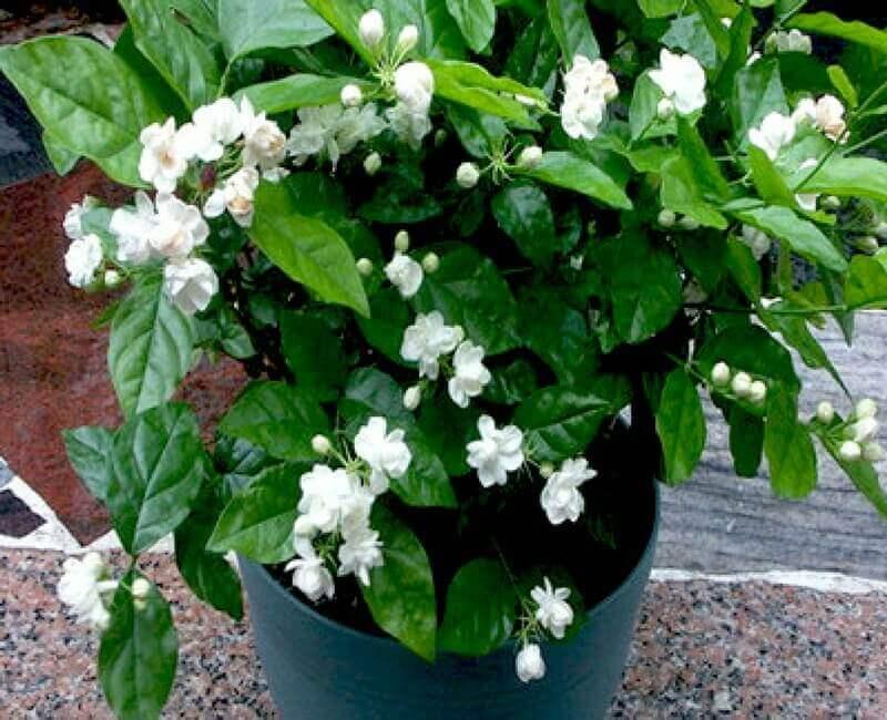 Best Plants To Keep In Your Bedroom To Help You Sleep  Home Gardeners