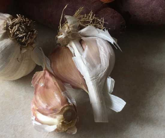 a picture of home grown garlic