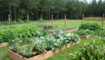Is It Safe to Use Pressure Treated Lumber in the Vegetable