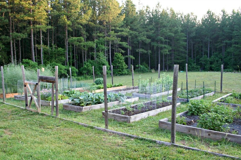 picture of Jeanne Grunert's raised bed vegetable garden