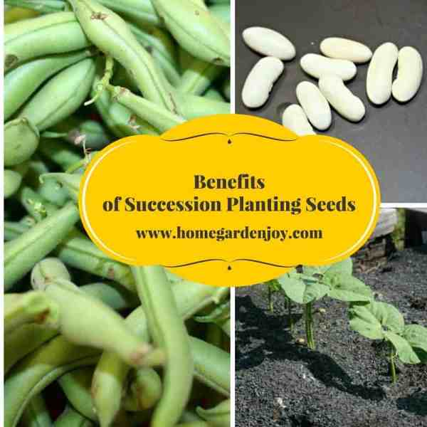 benefits of succession planting seeds