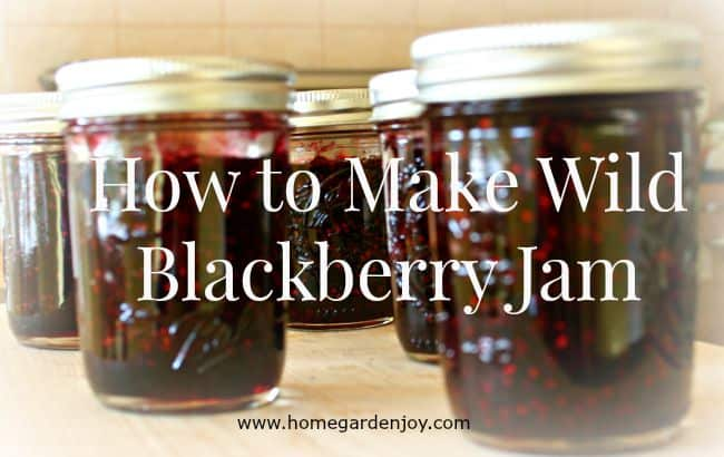 how to make wild blackberry jam