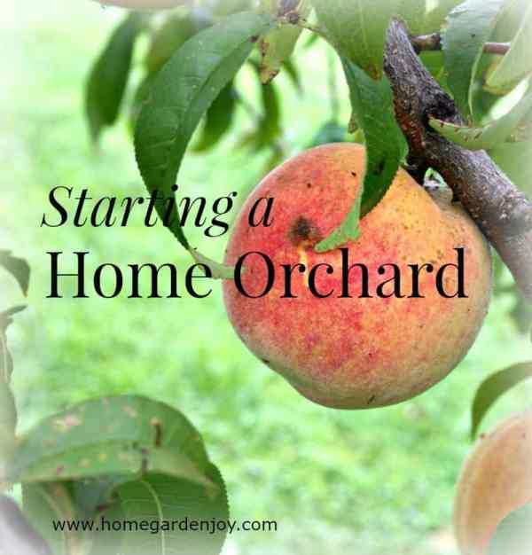 starting a home orchard