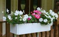 Window Box Design Ideas - Home Garden Joy