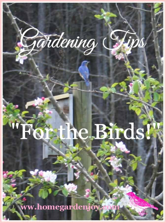 gardening tips for the bird