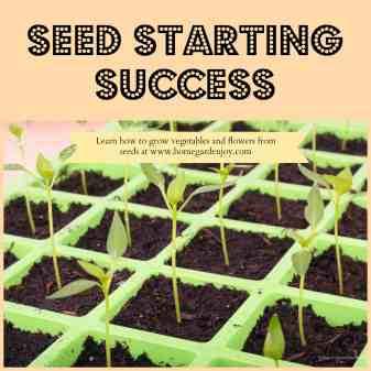 seed starting success