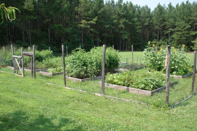 My vegetable garden this year. The big bushy things are the tomato plants!