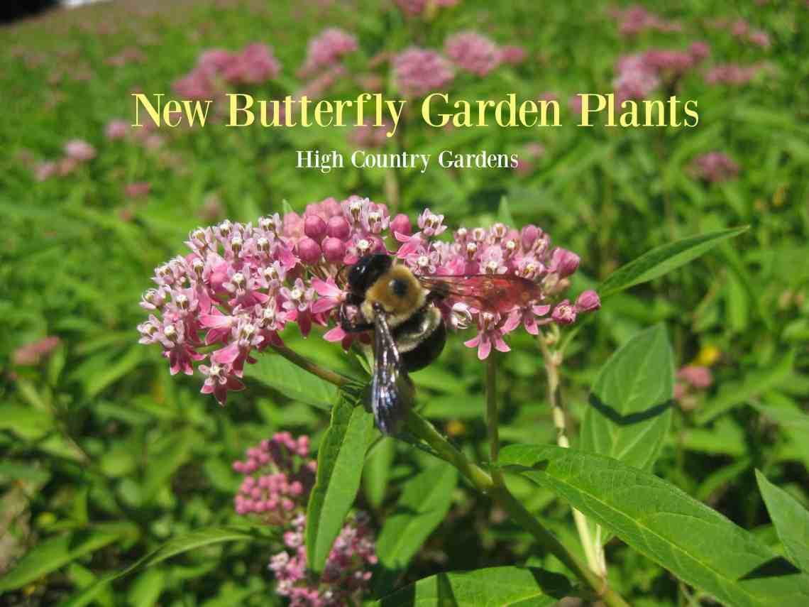 New Butterfly Garden Perennials - Home Garden Joy