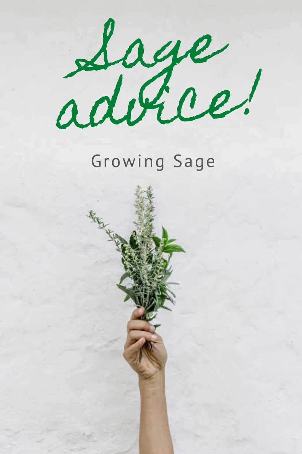photo of a hand holding growing sage