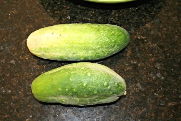 garden-cucumbers
