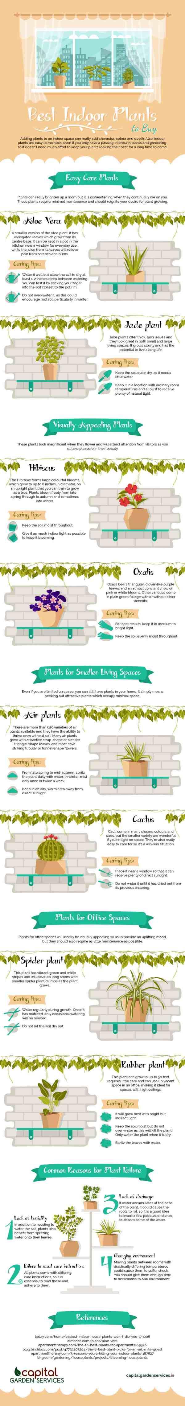 best-indoor-plants-infographic