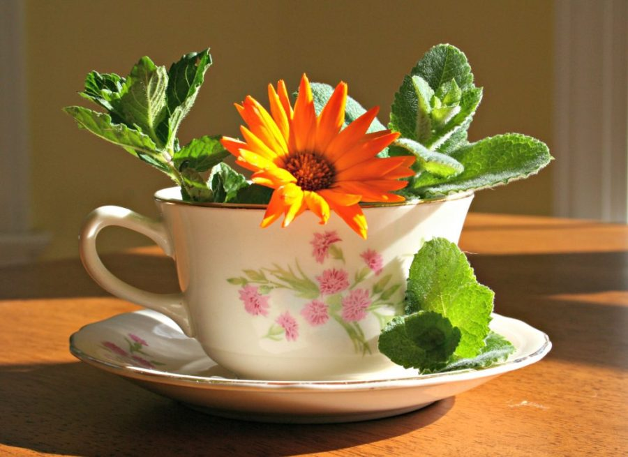 uses for garden hebrs
