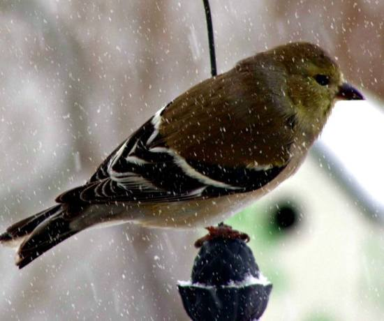 wild bird