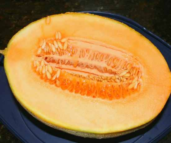 saving cantaloupe seeds