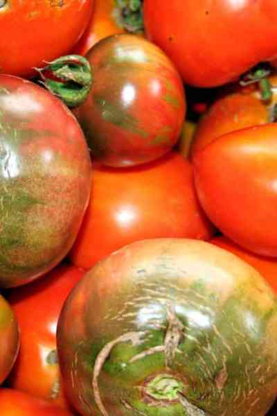 picture of heirloom tomatoes