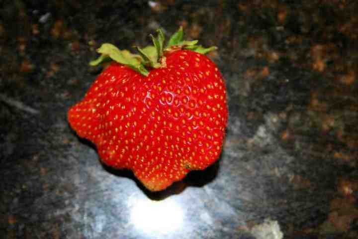 what causes deformed strawberries like this