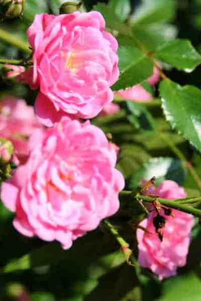 healthy organic gardening