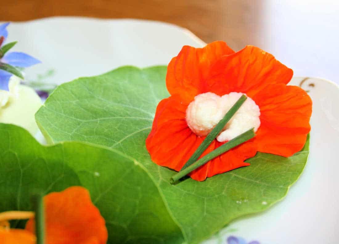 edible flower nasturtium picture
