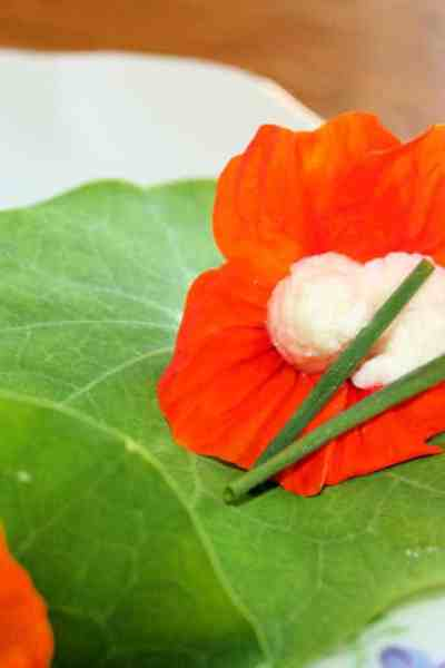 edible flower nasturtium picture