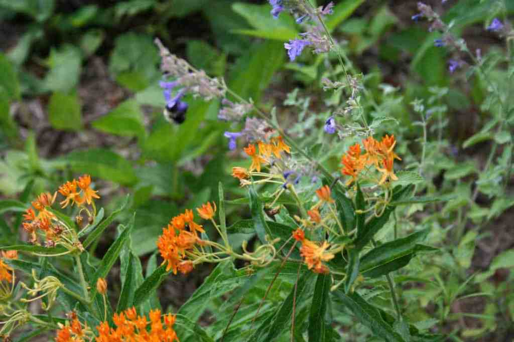 pollinator garden flowers