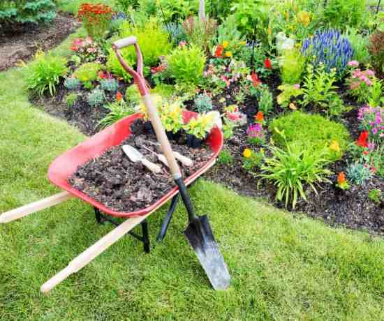 photo of wheelbarrow in the front yard