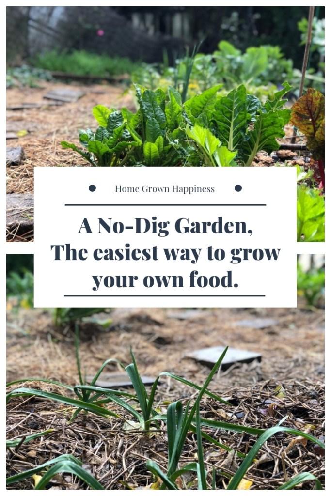 a no-dig vegetable garden