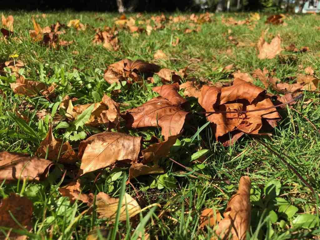 D.I.Y Leaf Mould