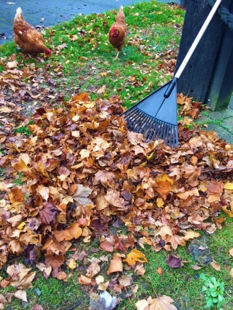 DIY Leaf Mould Cage