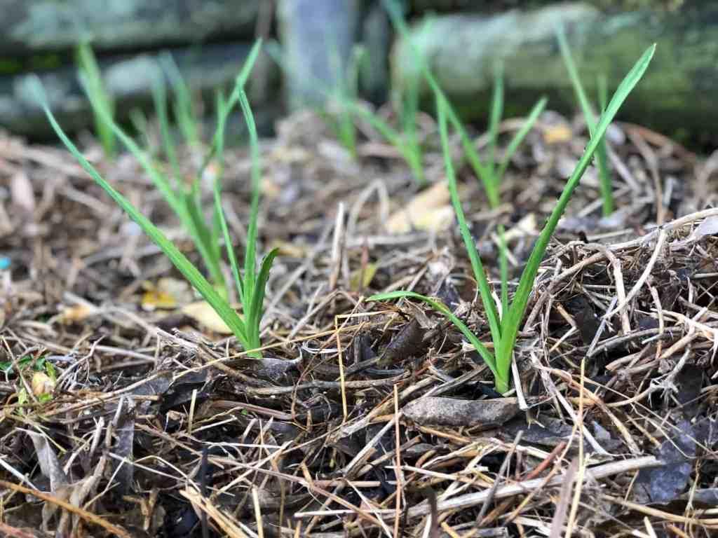 June New zealand garden
