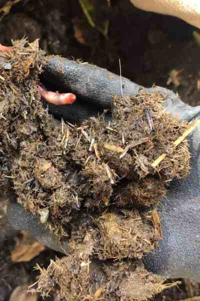 How to use manure in the garden