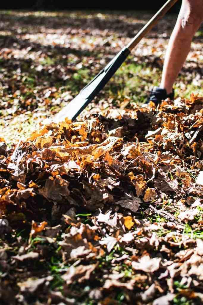 A rake raking brown leaves in on the ground