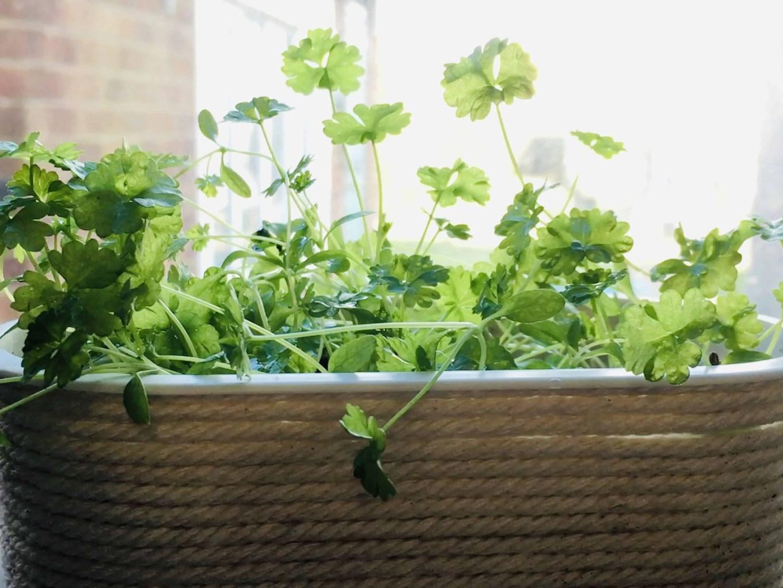 best herbs to grow in handmade planters!