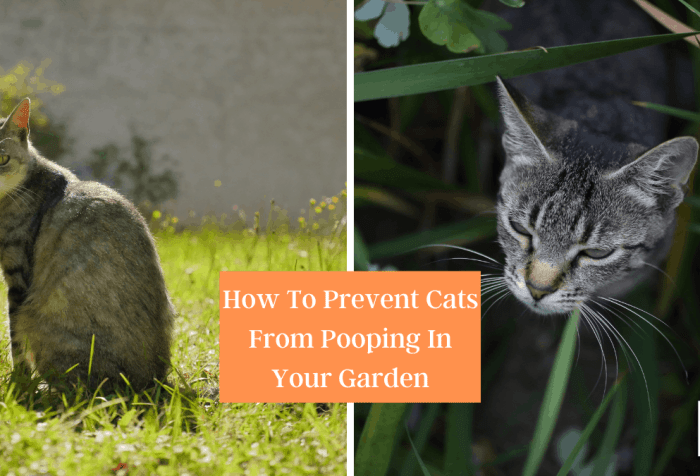 How To Deter Cats From Using Your Garden as a toilet