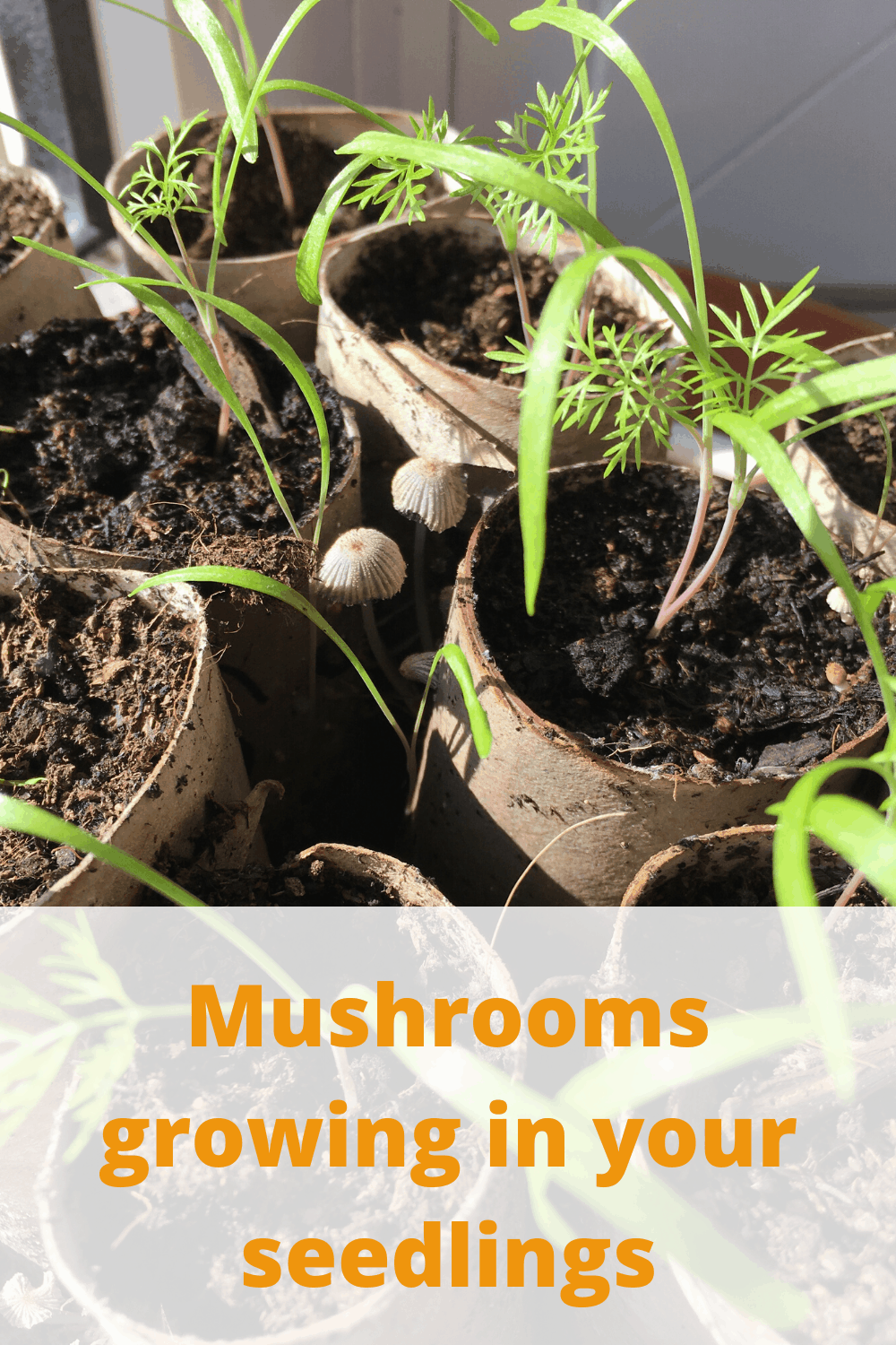 mushrooms are fine and not harmful to your plants
