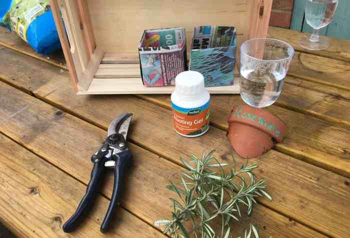 what you will need to propagate rosemary in the fastest way!
