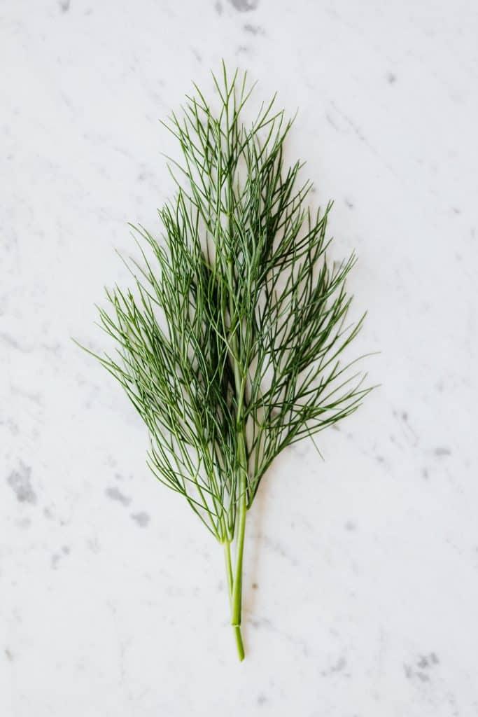 dill and the differences to fennel.