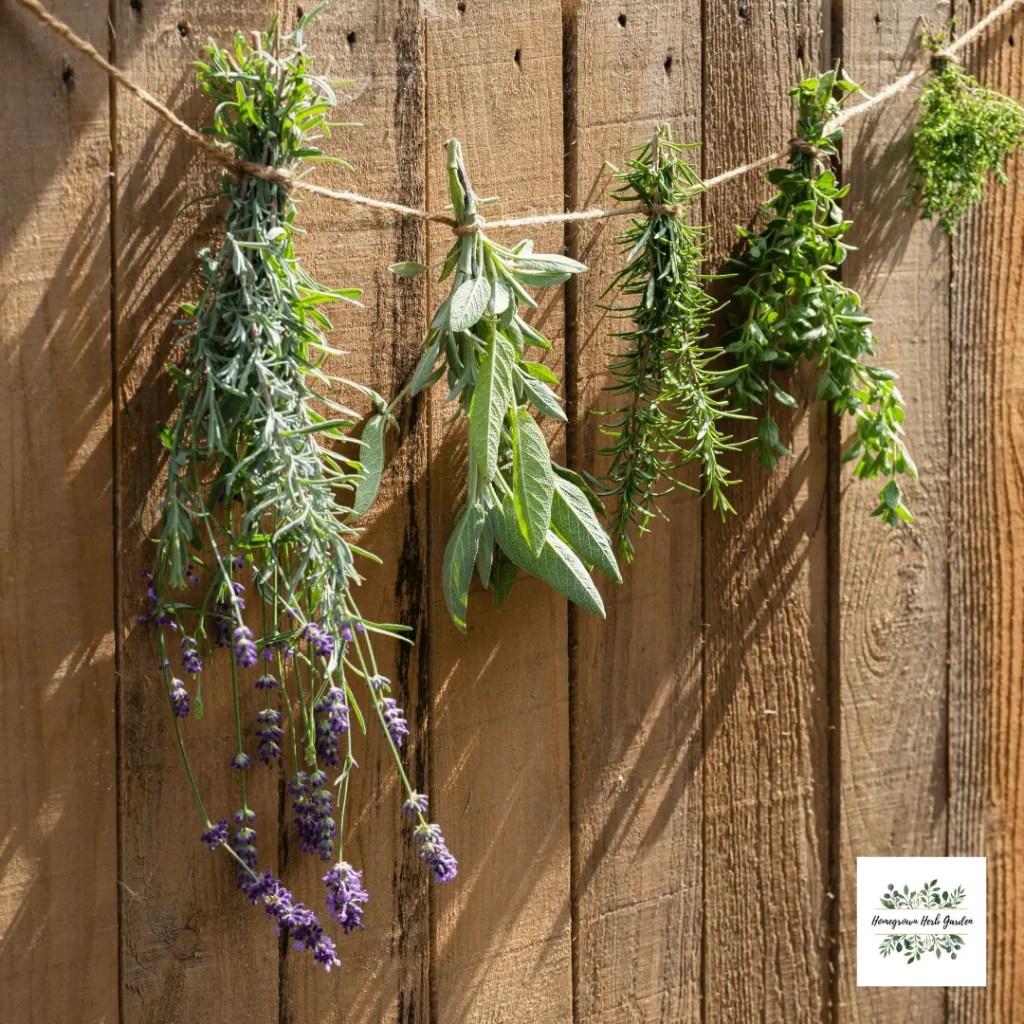 herbs air drying in the sun