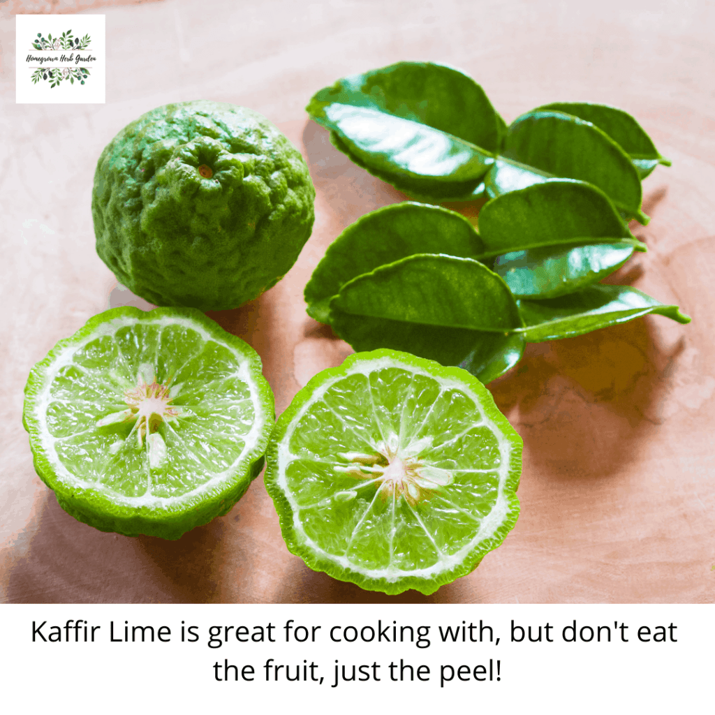 kaffir lime - don't eat the limes just the peel