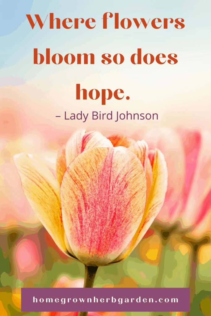 Where flowers bloom so does hope. – Lady Bird Johnson